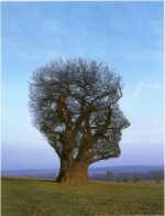 Pink Floyd Book Tree Of Half Life  1997